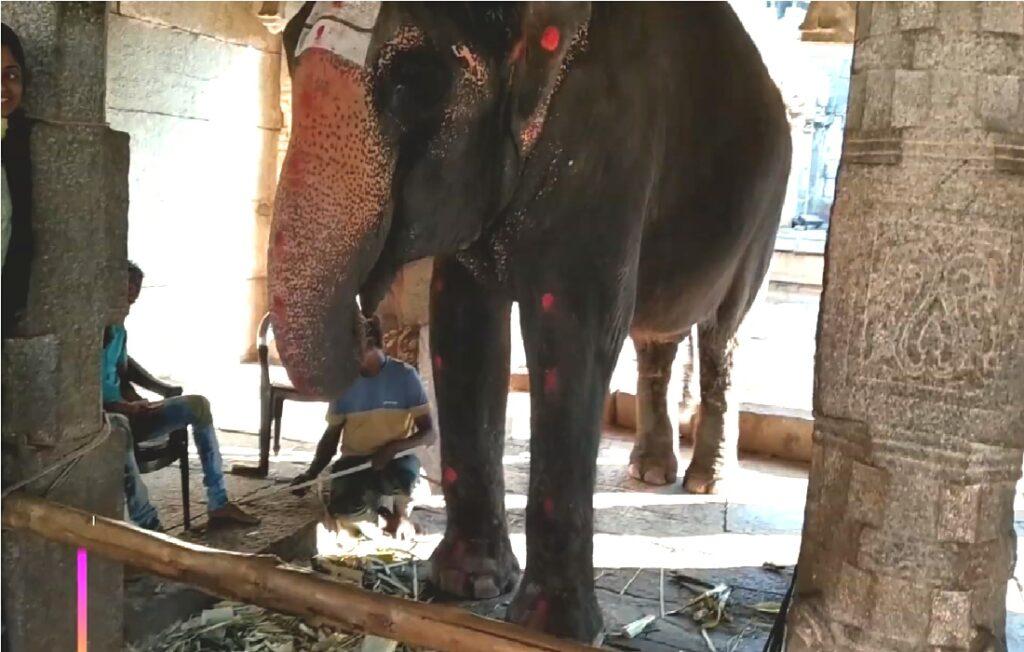 Laxmi Elephant